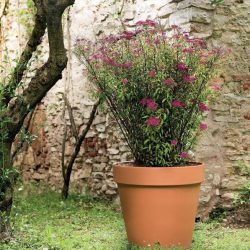 Standard Terracotta Pot – Cotto Garden