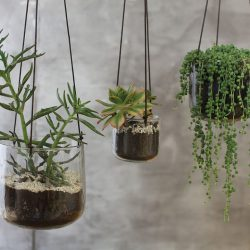 Viri Hanging Planter – Clear Hammered Glass