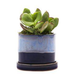 Minute Planter – Cobalt – 7CM