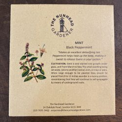 Mint – Black Peppermint