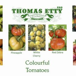 Gift Box  – Colourful Tomatoes