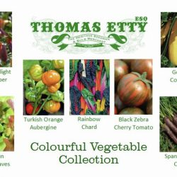 Gift Box  – Coulorful Vegetable Collection