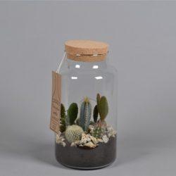 Compo Green bottle¨ Cactus FC17.1227