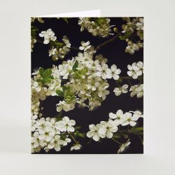 Cherry Blossom – Geeting card