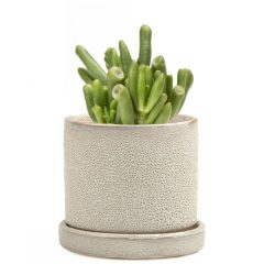 Minute Planter – Ivory Speckles – 7CM