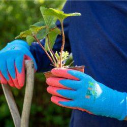 Budding Gardener Gloves