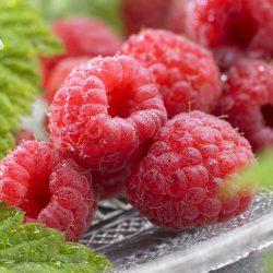 Rubus id. Malling Promise
