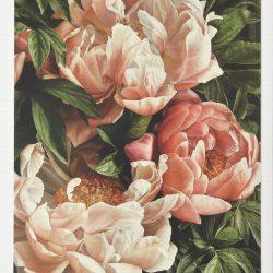 Coral Peony II – Geeting card