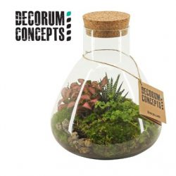 Compo foliage in glass with cork